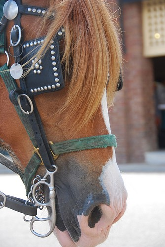 Choose wisely, take help from a horse expert when buying a bit or bridle and keep your horse's comfort in mind.