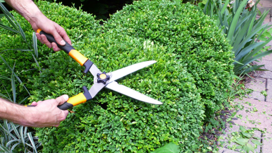 Finding the Right Gardener