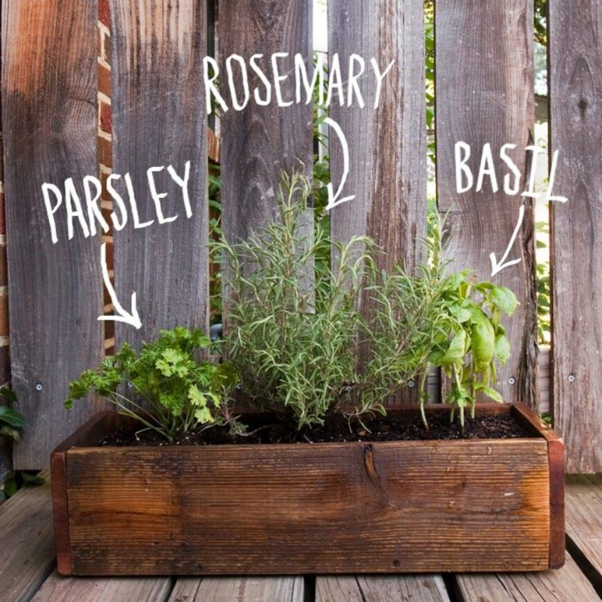 Good Time To Grow Herbs Is Anytime! Grow Inside Your Home.